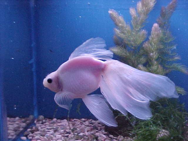 goldfish photos from gary